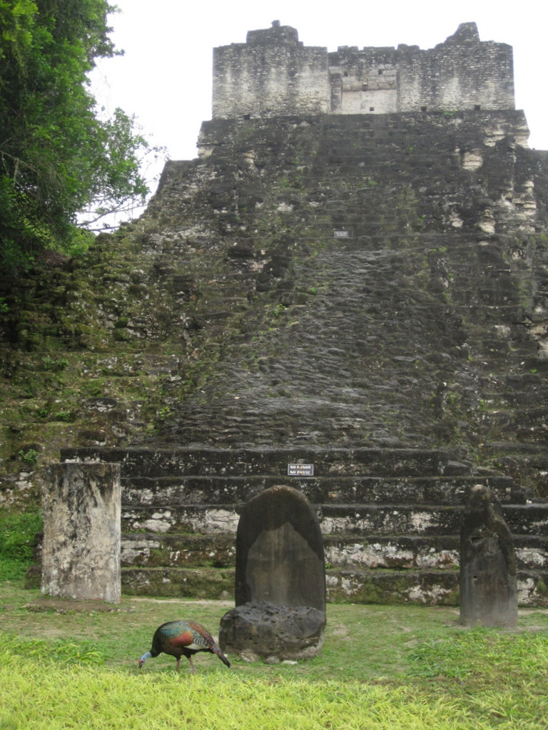 Temple IV